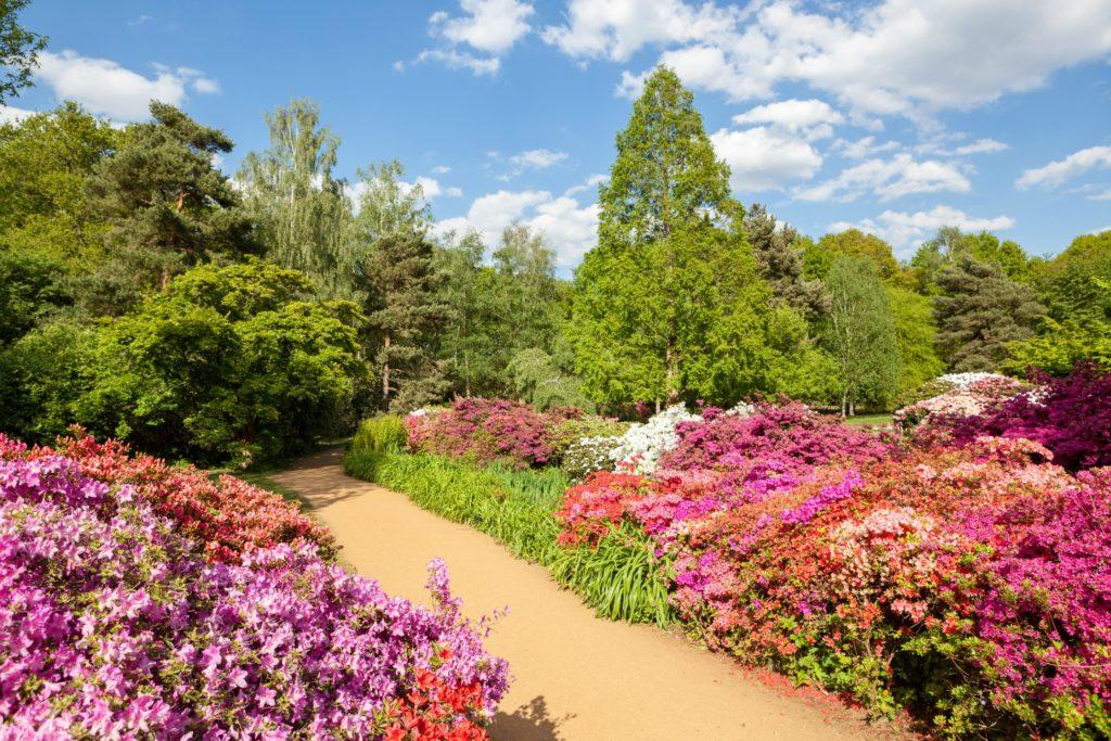 Les meilleurs endroits secrets à Londres : Image du Isabella Plantation