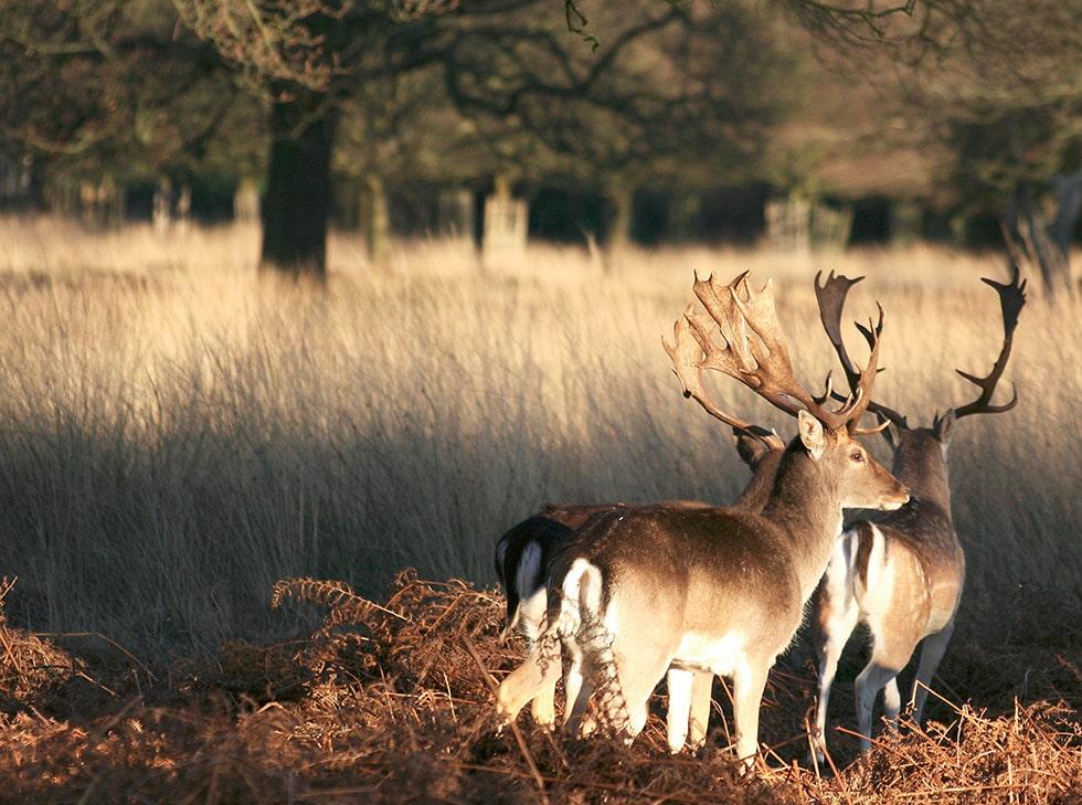 Activités gratuites à Londres : Image du Richmond Park