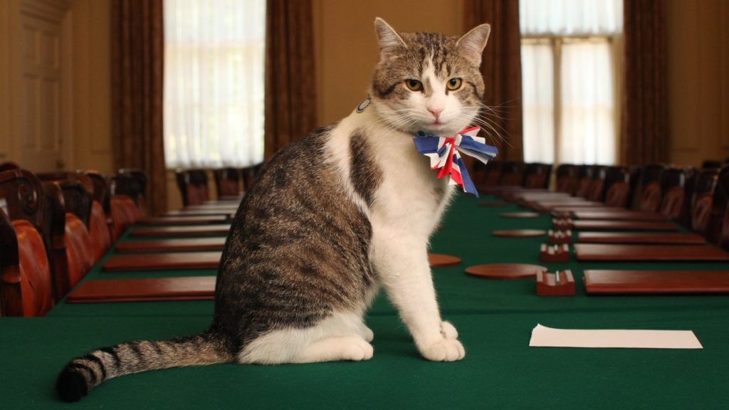 le chat de downing street